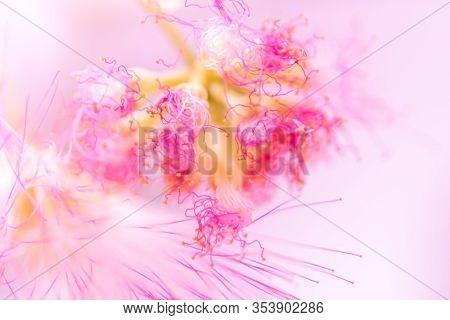 Defocused Blurred Pink Flower Natural Spring Background