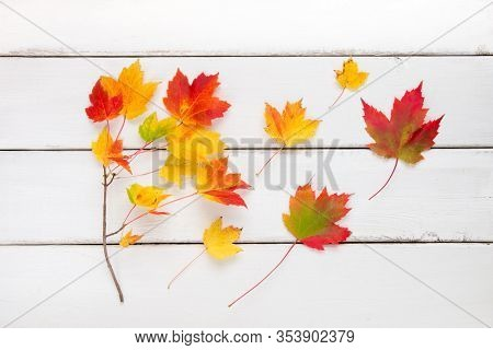 Colorful Autumn Maple Leaves On White Wooden Background.
