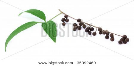 Vitex Negundo or Medicinal Nishinda leaves with fruits