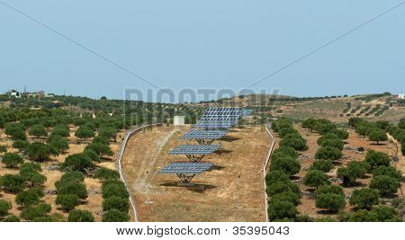 Array Of Solar Battery In Olive Grove