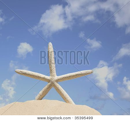 Starfish On Sand With Blue Sky Background