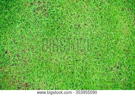 The Top View Of The Green Lawn, Green Grass Texture Background, Green Lawn, Backyard For Background,