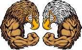 Cartoon Image of a Bald Eagle and Golden Eagle and Flexing Arms poster