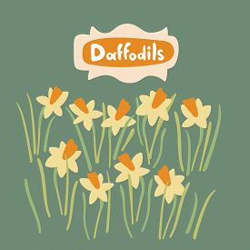 Daffodil Flowers And Leaves In Flat Style. Vector Hand Drawn Floral Object Set. Botanical Stock Isol