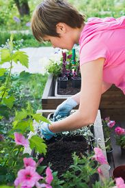 Young European Woman Gardener Planting Flowers In Wooden Container Pot Outside, Outdoors Planting La