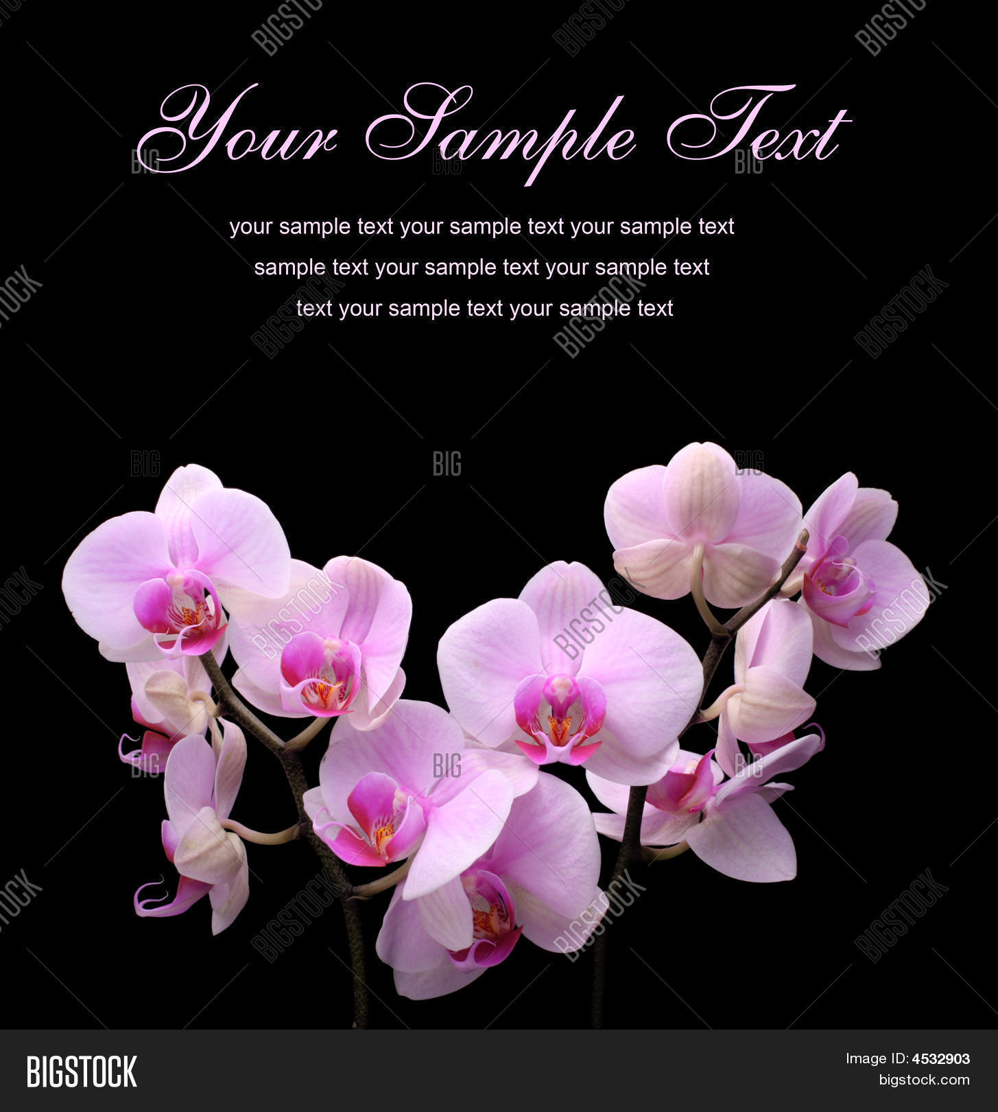 Pink Orchid Flower On Image Photo Free Trial Bigstock
