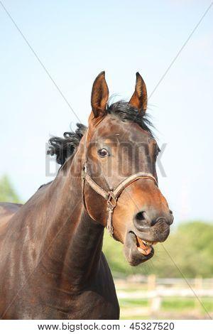 Lustiges Pferd Portrait