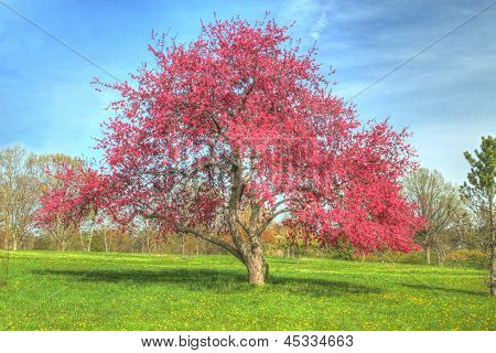 A colorful Tree