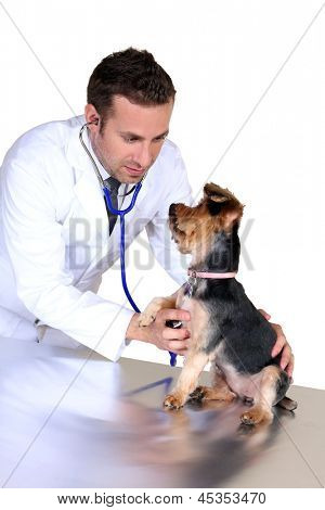 Young veterinarian examining a dog poster
