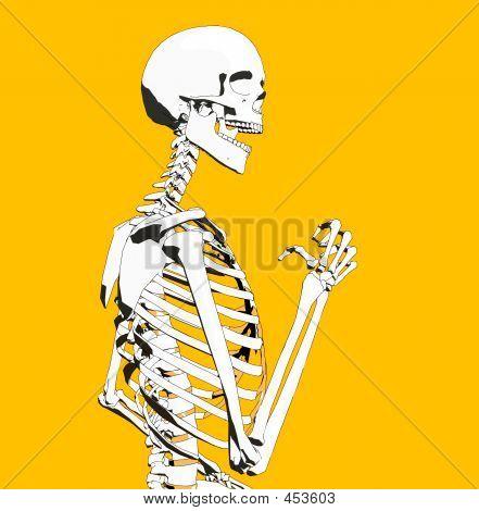 Bone 91
