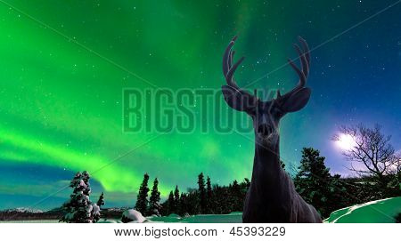 Mule deer and Aurora borealis over taiga forest