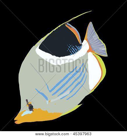 Ilustrace sedle Butterflyfish
