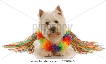 Westie Dressed As Hula Dancer