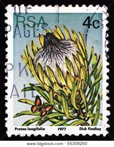 Postage Stamp South Africa 1977 Long-leaf Sugarbush, Plant