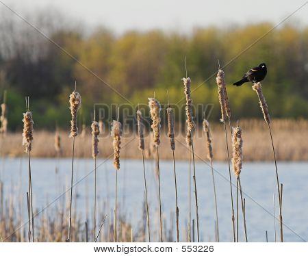 Resting Bird