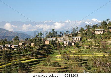 Himalayan Rice Fields