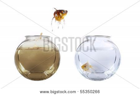 Conceptual image of a fish jumping from his polluted bowl into a clean fishbowl poster