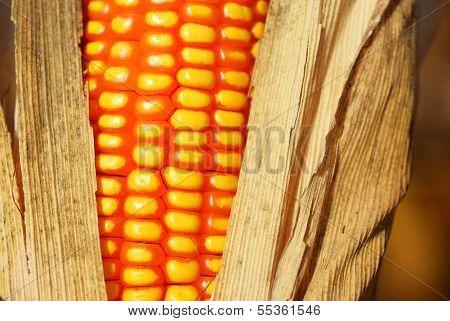 Corn For Animal