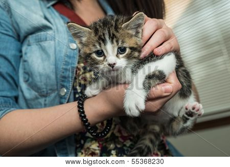 Person Holding Pet Baby Cat