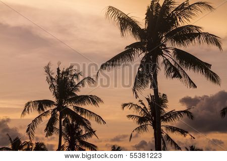 Palm trees at sunset time