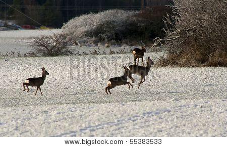 running deer