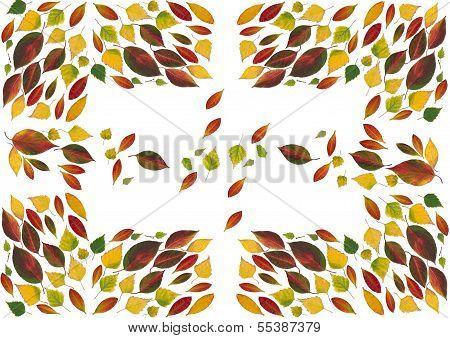 arrangement of multicolor leaves as background
