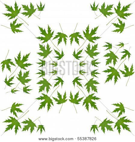 leaves of japanese maple tree as background