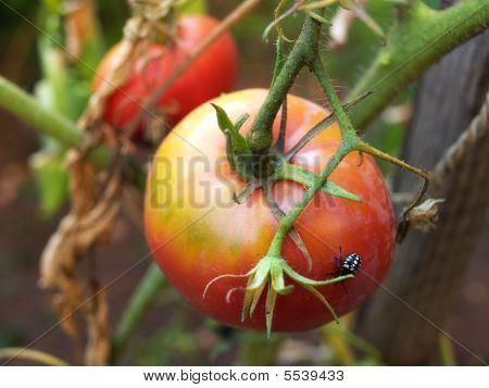 Agricultural Parasites