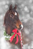 Dreamy image of an Arabian horse with a Christmas wreath poster