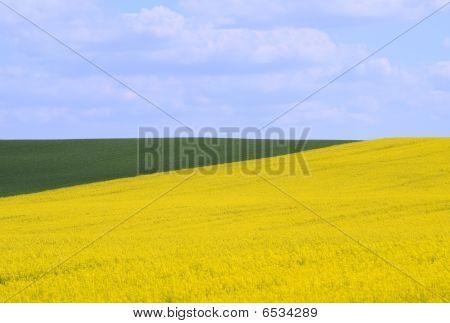 Cornfields in the springtime