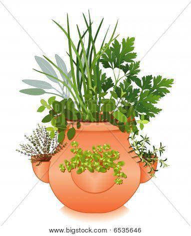 Herb Garden In Old Fashioned Strawberry Jar