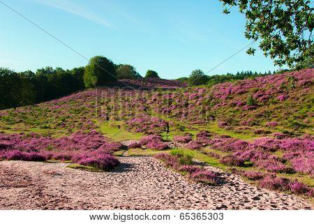 Varied Landscape