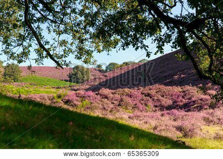 Hilly Moorland