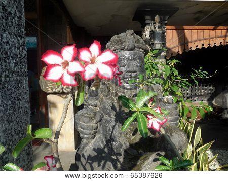 Flowers & Buddahs