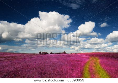 Magic Landscape - Pink Field And Sky With Real Stars