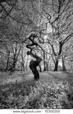 Forrest Tissue - Tree In Black And White