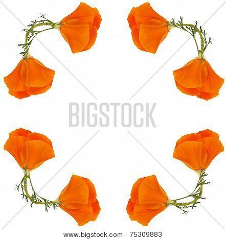 Frame Of Flowers Eschscholzia Californica