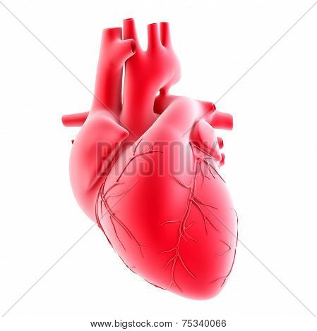 Human Heart. 3D Illustration. Isolated, Contains Clipping Path