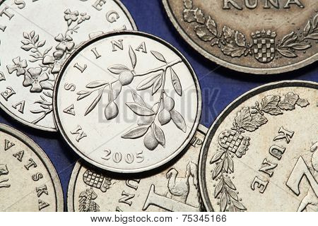 Coins of Croatia. Olive Branch (Olea Europaea) depicted in the Croatian 20 lipa coin. poster