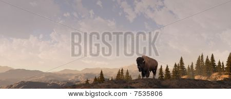 Mountain Bison