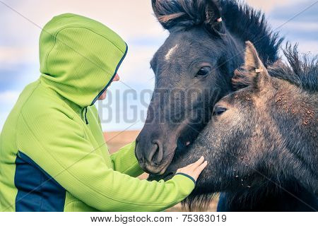 A woman befriends a group of Icelandic Ponies in the Iceland countryside