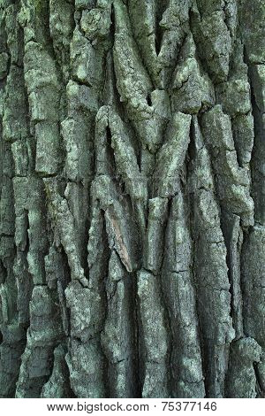 Detailed images of deep relief oak bark poster