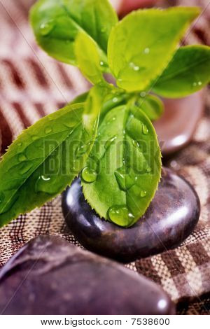 Spa Treatment - Rock And Green Plant