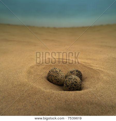 Bird Eggs In The Desert