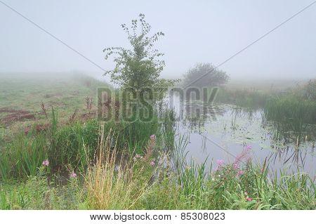 Summer River In Foggy Morning