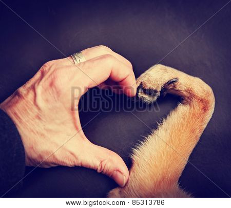a person and a dog making a heart shape with the hand and paw toned with a retro vintage instagram filter effect app or action