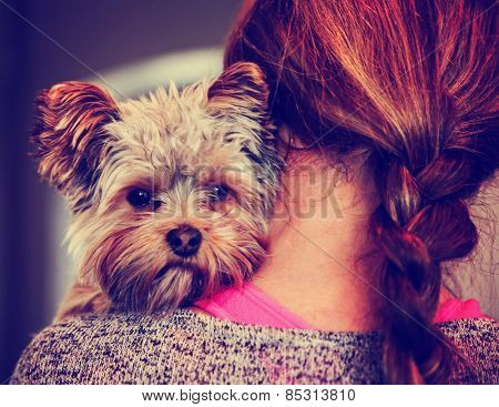 a cute yorkshire terrier peeking from around a woman toned with a retro vintage instagram filter effect app or action