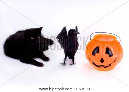 Black Cat, Raven and Candy Pumpkin.
