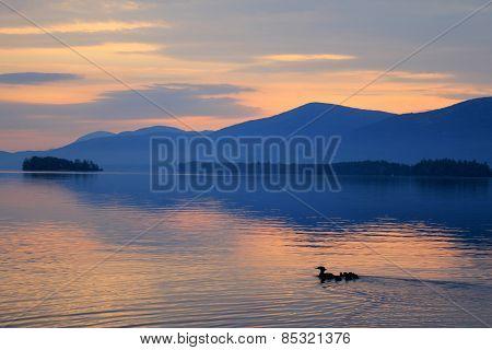 Family of Ducks Takes Swim at Sunrise on Lake George, NY Adirondacks
