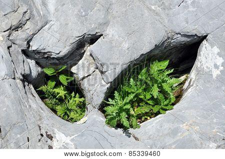 Plants In Limestone Hole